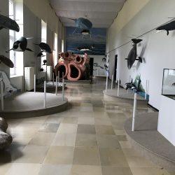 Ausstellung gehängt