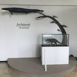 Die Urzeitwale
